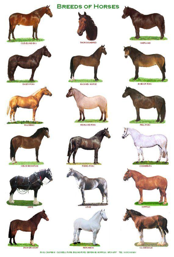Породы лошадей: название, описание, фото, видео