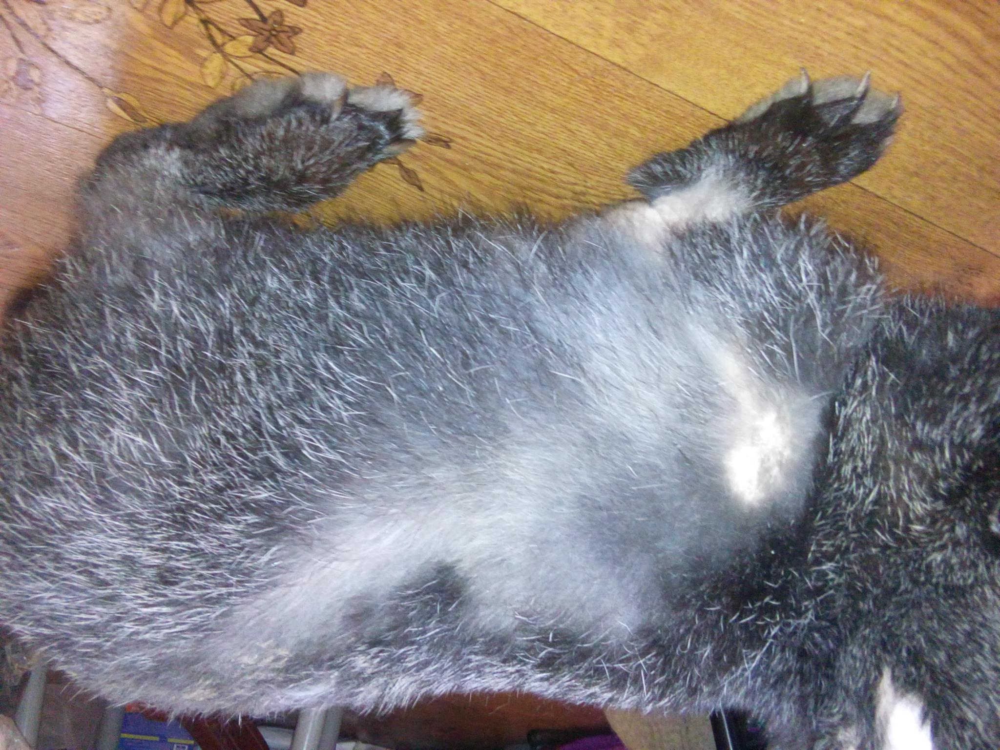 Хейлетиоз у кроликов: лечение, профилактика, симптомы
