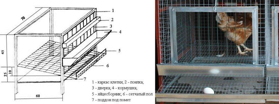 Клеточное содержание кур несушек в домашних условиях