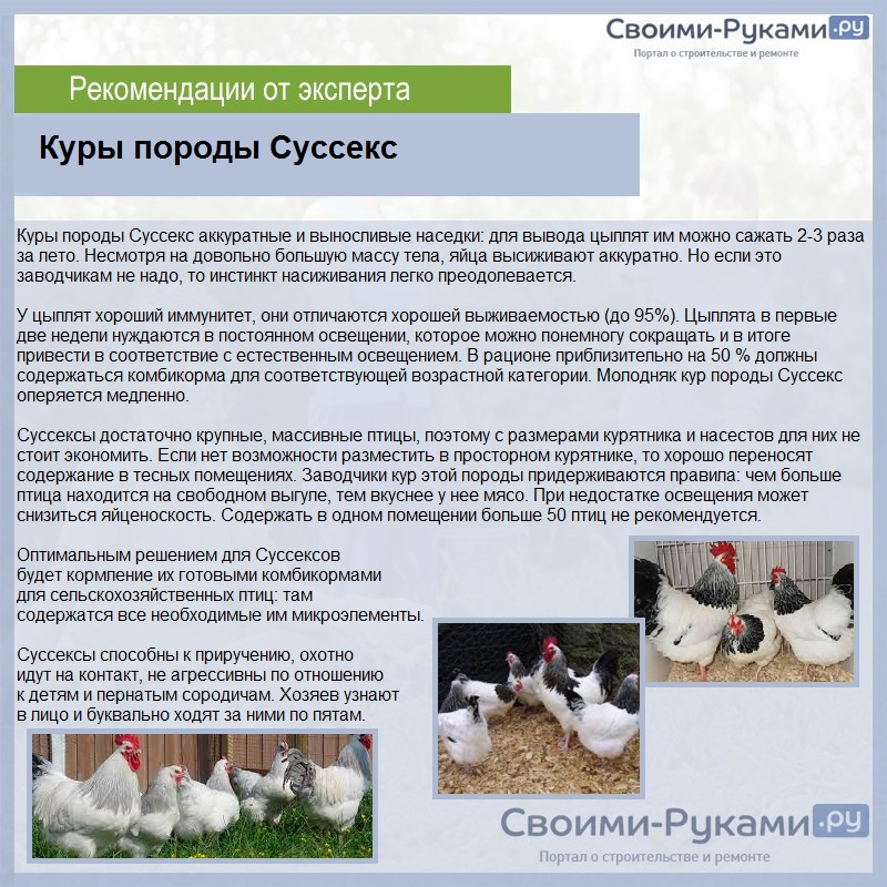 Породы кур несушек с фотографиями и названиями: описание