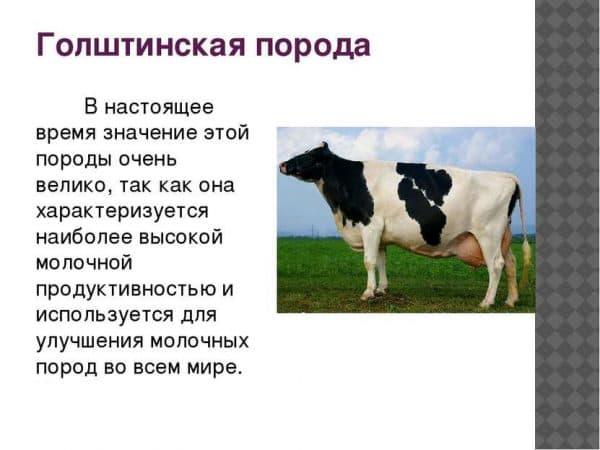 Молочная продуктивность коров: влияющие факторы