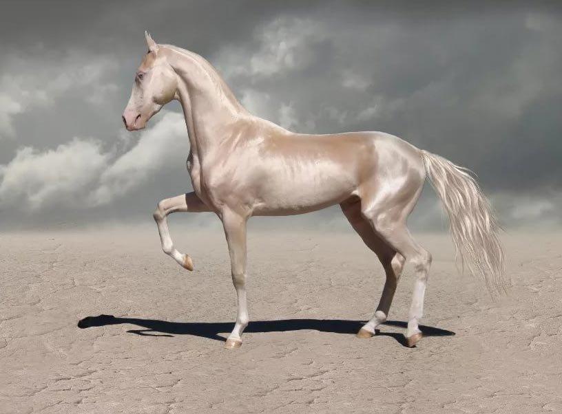Ахалтекинцы — символ и гордость туркменистана