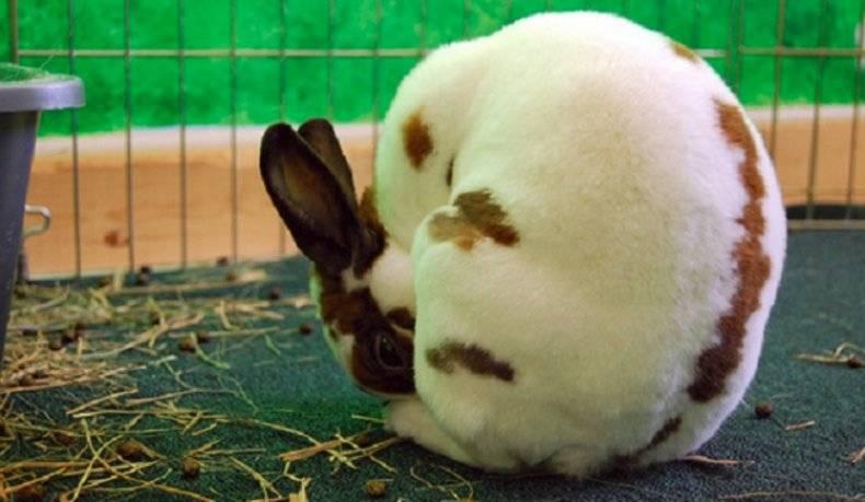 Кролик вялый без видимых причин. почему кролик ничего не ест и не пьет. лечение остановки пищеварения - новая медицина