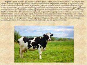 Нормальные показатели температуры тела теленка и коровы и причины повышения