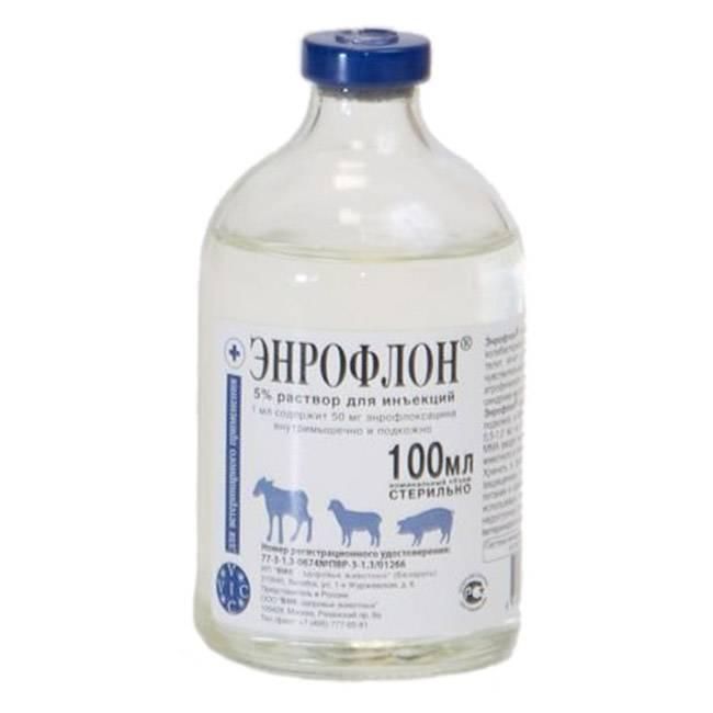 Инструкция по применению в ветеринарии антибиотика энрофлон для птиц: цыплят, кур и бройлеров