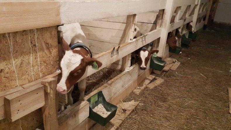 Основные разновидности поилок для коров, пошаговый алгоритм изготовления своими руками