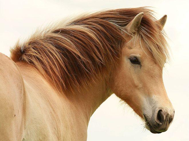 Грива у лошади: функции и правильный уход