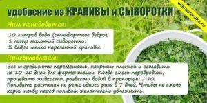 Как и когда цыплятам можно давать траву, крапиву, зелень: советы по составлению правильного рациона