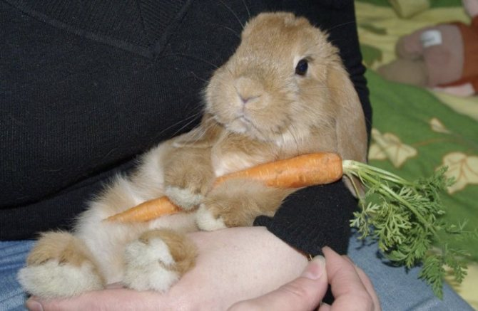 Можно ли кормить кроликов кабачками, тыквой, огурцами
