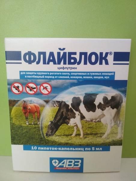 Как избавить корову от клещей и других насекомых: это надо знать