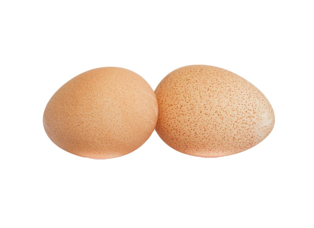 Чем отличается цесарка от курицы: определяем различия и особенности птиц
