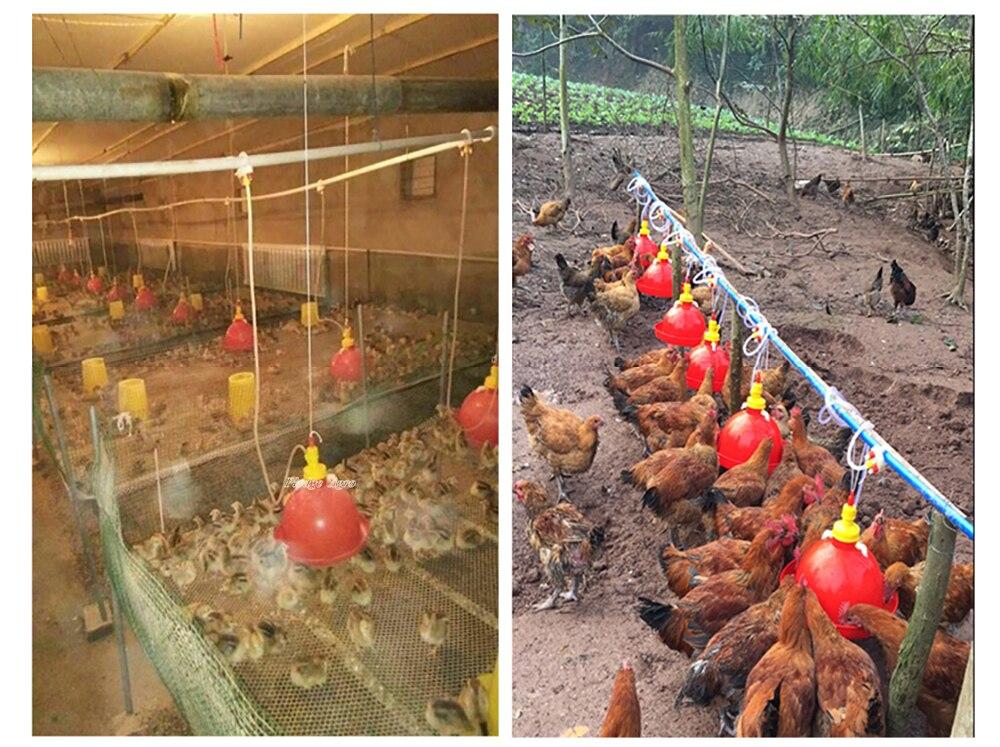 Поилки для цыплят своими руками фото оригинальные идеи