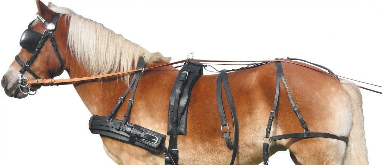 Сбруя: состав снаряжения для лошади, разновидности и функции