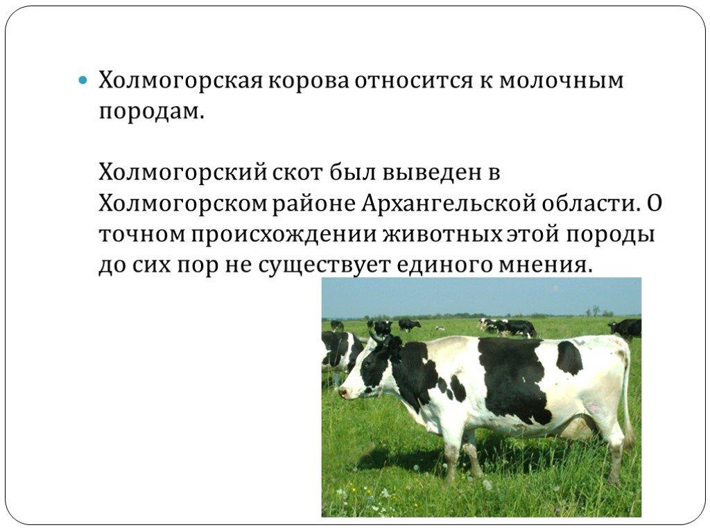 Повышение продолжительности хозяйственного использования молочного скота — молочное скотоводство в россии — статьи, публикации