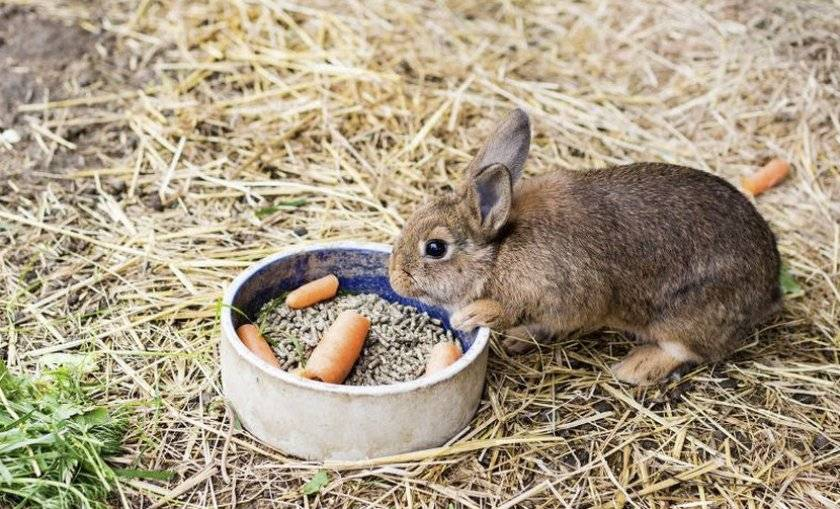 Кормление кроликов в домашних условиях для начинающих: советы, видео