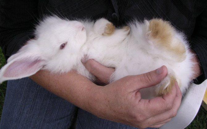 Паралич задних конечностей у кроликов: как правильно решить проблему