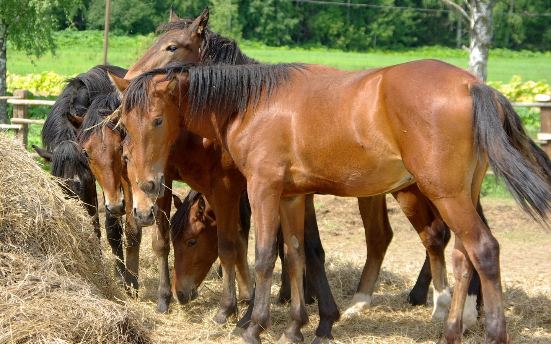 Лошади в conan exiles