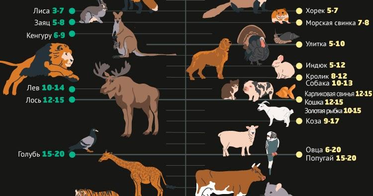 Сколько живут лошади: факторы, влияющие на продолжительность жизни