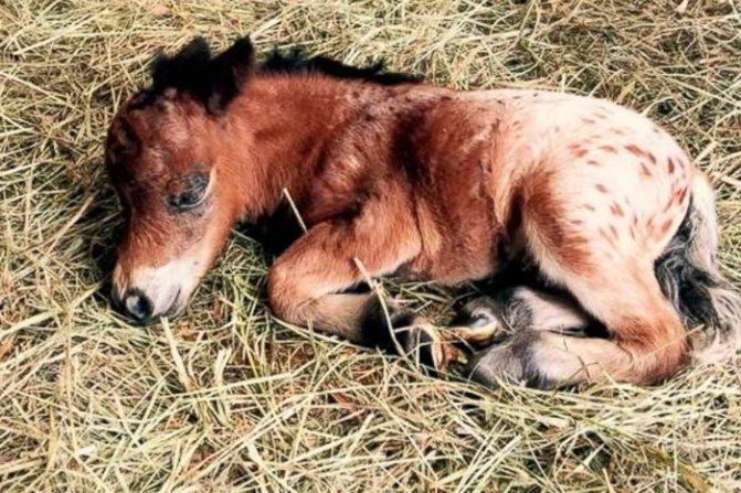 Как подготовиться к рождению жеребенка и чем помочь лошади при родах?