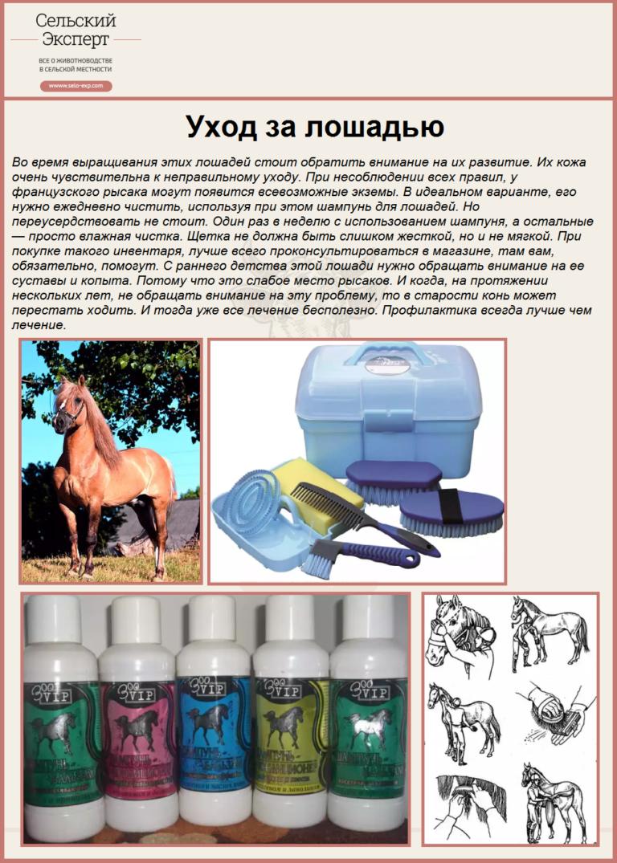 ✅ как ухаживают за лошадьми: правила ухода и содержания домашних лошадей - tehnomir32.ru