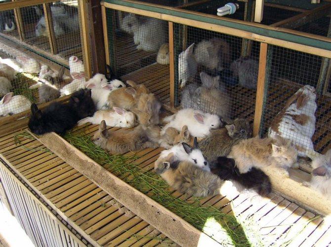 Когда крольчата открывают глаза и выходят - лучший огород