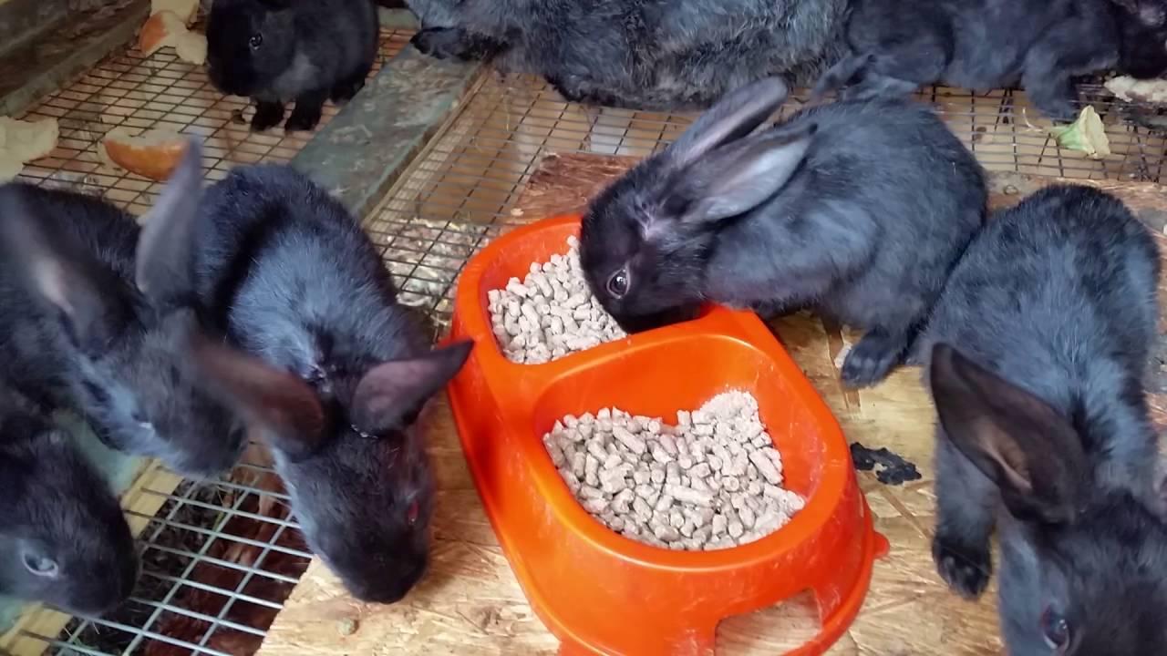Кормящая крольчиха перестала есть. почему кролик стал пассивным (вялым) – не ест, не пьет, не играет? основные причины отсутствия аппетита у кроликов