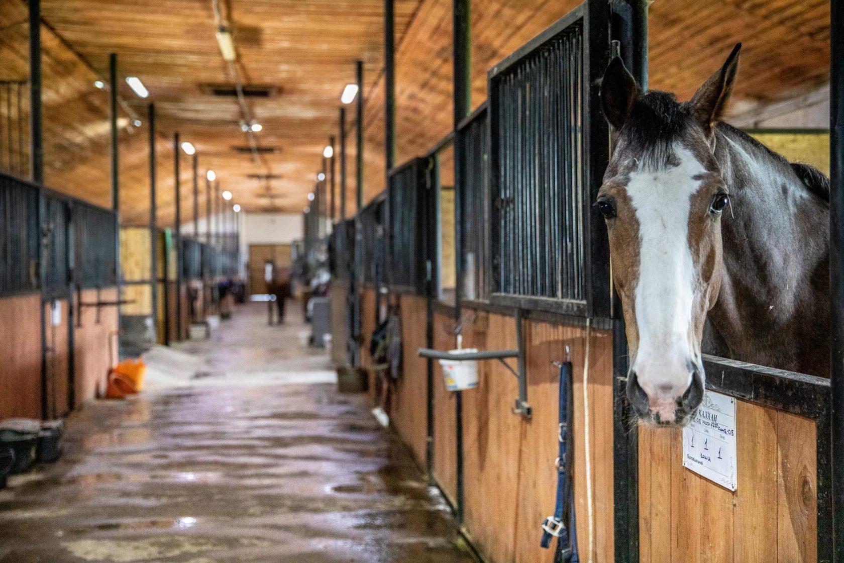 Как содержать лошадь в частном доме в домашних условиях: сколько стоит, полезные советы для новичка