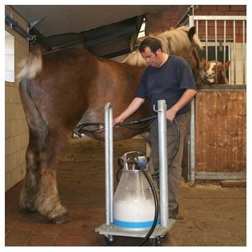 ✅ молоко лошади: как доят кобылу и как называется напиток из ее молока - tehnomir32.ru