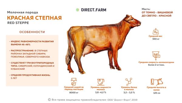 """""""красная степная"""" порода коров ?: характеристики, особенности выращивания, вакцинация и борьба с болезнями, фото и видео"""