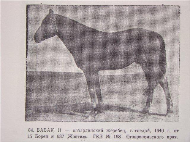 Кабардинская порода лошадей: описание, уход и содержание, фото