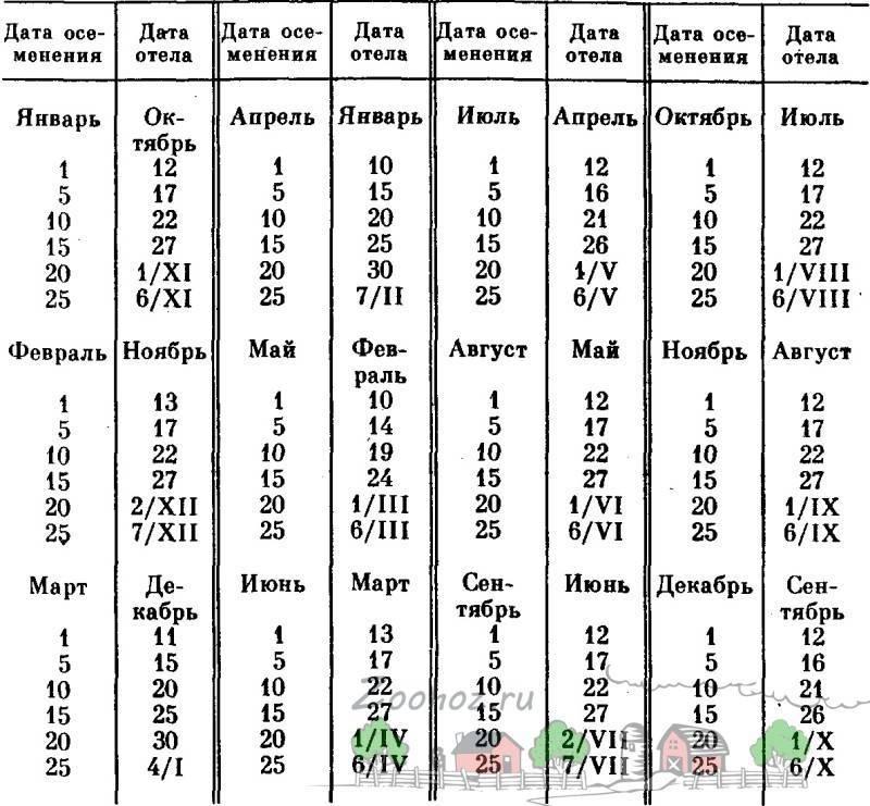 Календарь стельности и отела коровы по дате осеменения: сроки, таблица, график