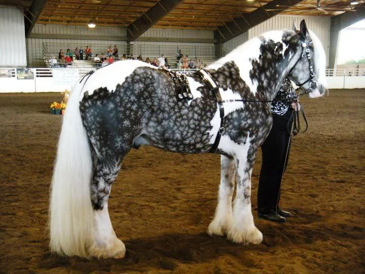 Самая дорогая лошадь в мире и в россии: лушие породы и их характеристики