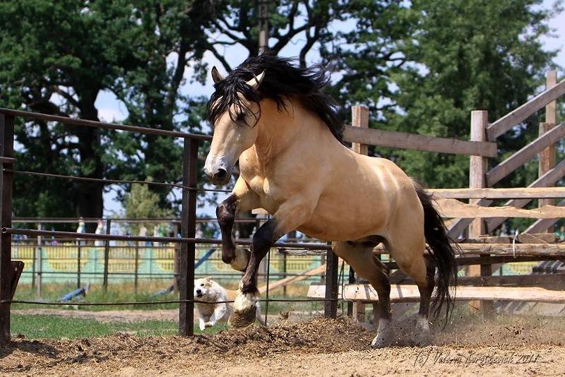 Гнедая лошадь – какой это цвет: описание масти, подмастков и отмасток — приколись — смешные приколы — видео про животных, полезные истории, картинки о путешествиях