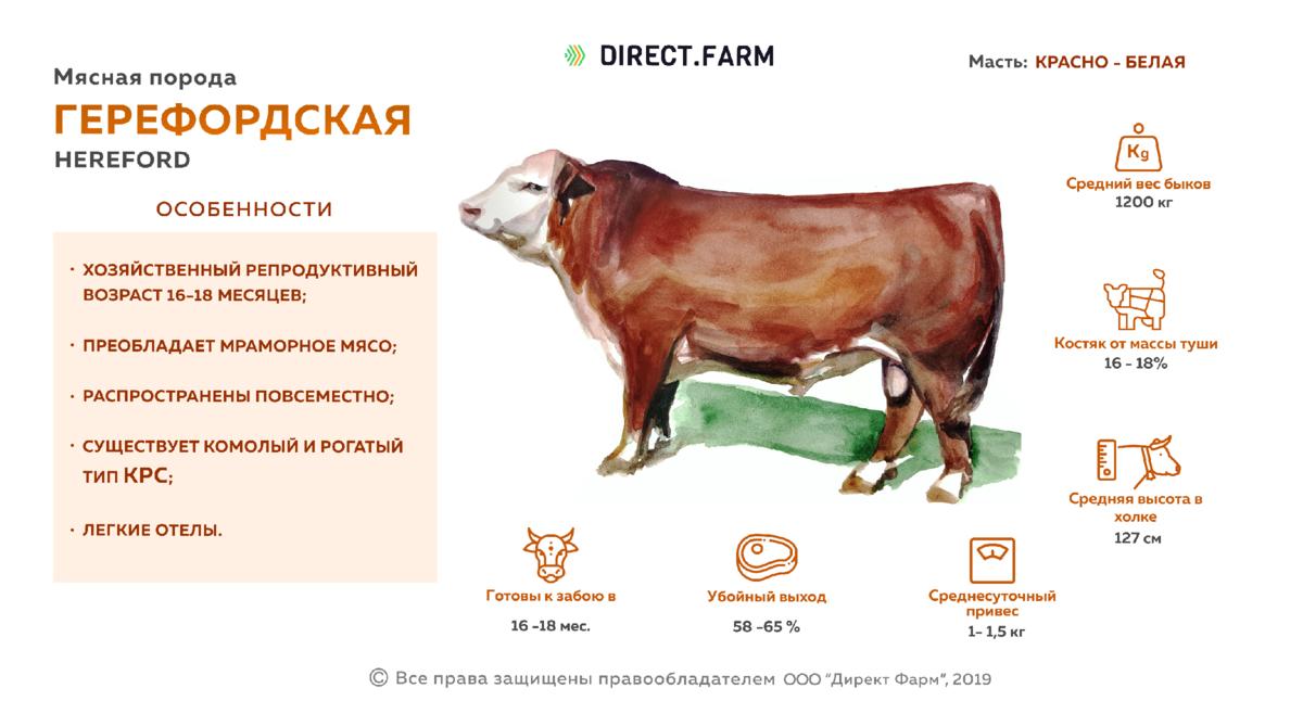Айрширская порода коров: особенности и характеристика