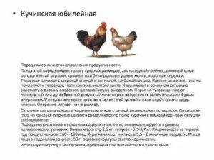 Пушкинская курица: фото, описание породы, отзывы
