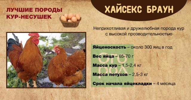 Сколько зерна надо курице?