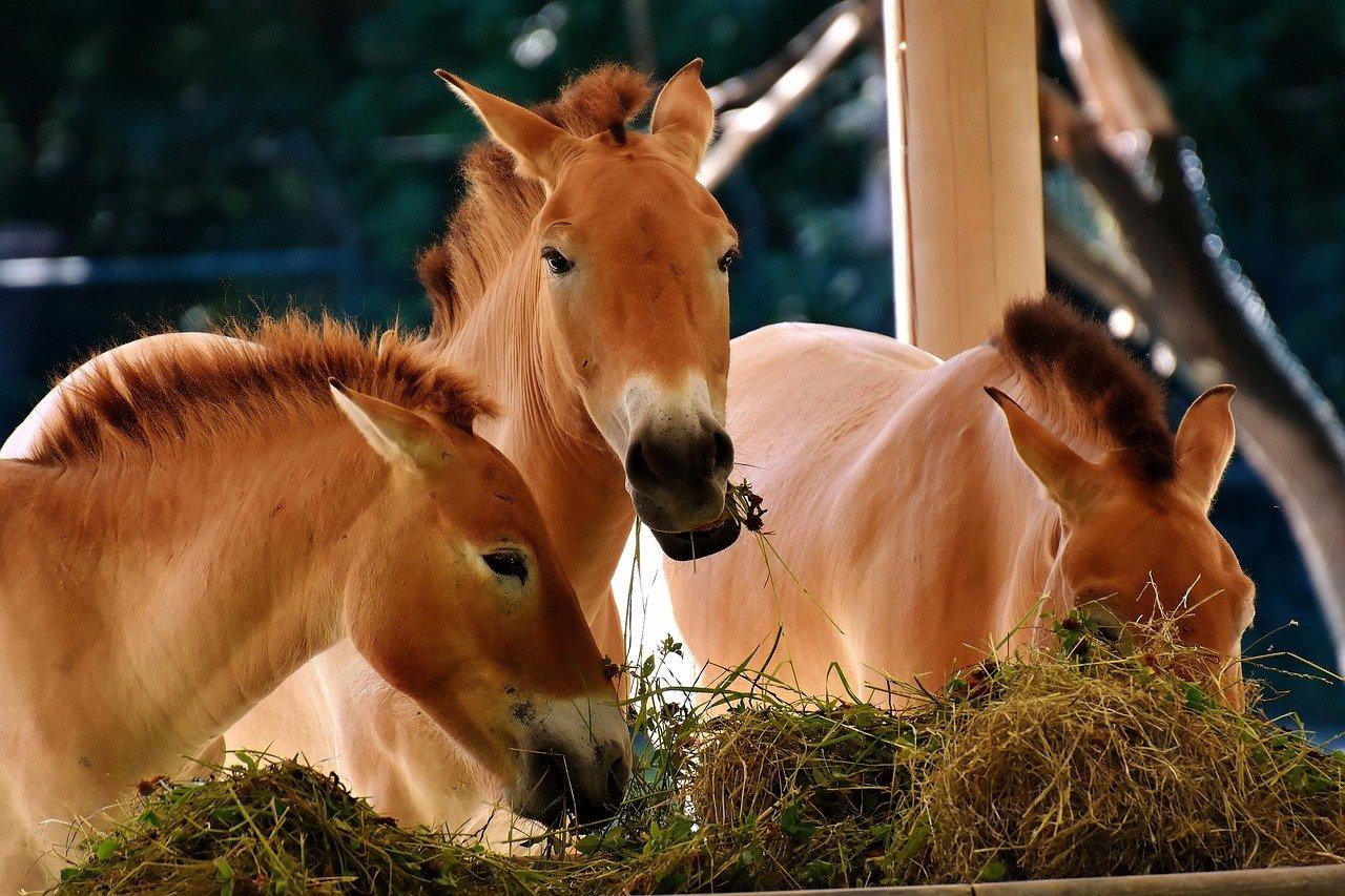 Чем кормить лошадь