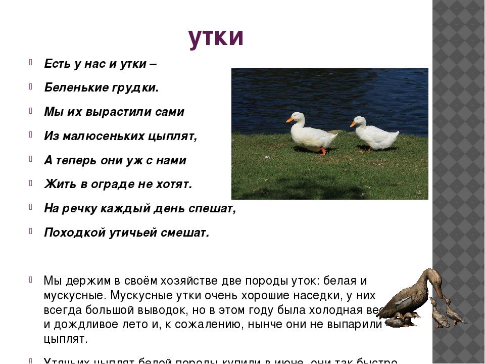Порода благоварская: описание кросса