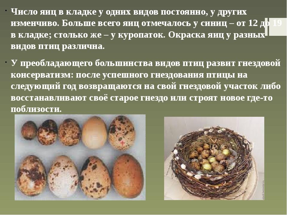 От чего зависит цвет скорлупы и желтка куриного яйца