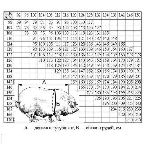 Таблица веса свиней: как определить вес свиньи, не взвешивая её на весах