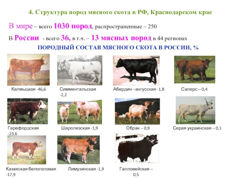 Все о качестве мяса: порода, возраст, корм, выдержка, убой и разделка