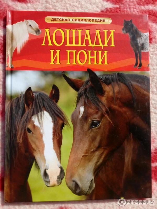 Содержание лошади в месяц, сумма - во сколько обходится содержание конюшни, жпс трекера