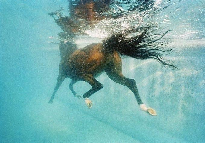 Почему лошадь нельзя поить сразу после скачки? описание, фото и видео  - «как и почему»