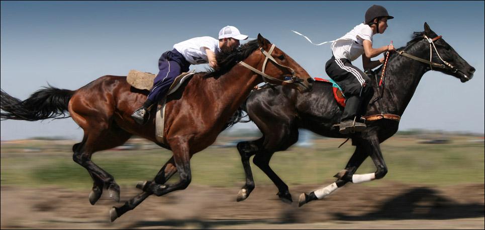 ✅ скорость бега лошади (максимальная, средняя): с каретой, с наездником, на скачках - tehnoyug.com