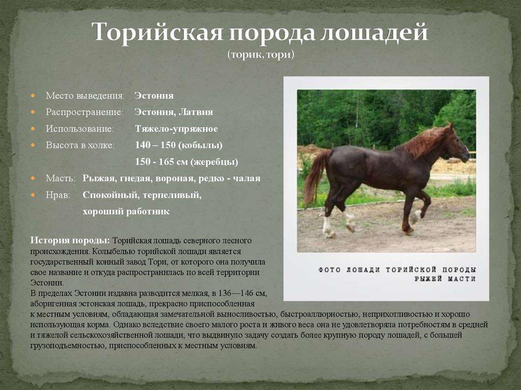 Дестриэ — описание и фото породы лошади