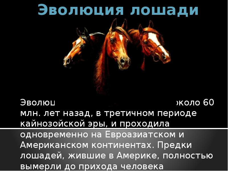 Происхождение и эволюция лошадей   мои лошадки