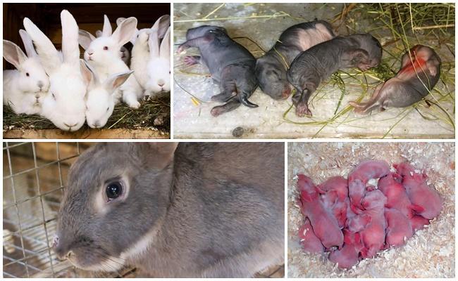 Крольчиха съедает крольчат: причины и как это предотвратить?