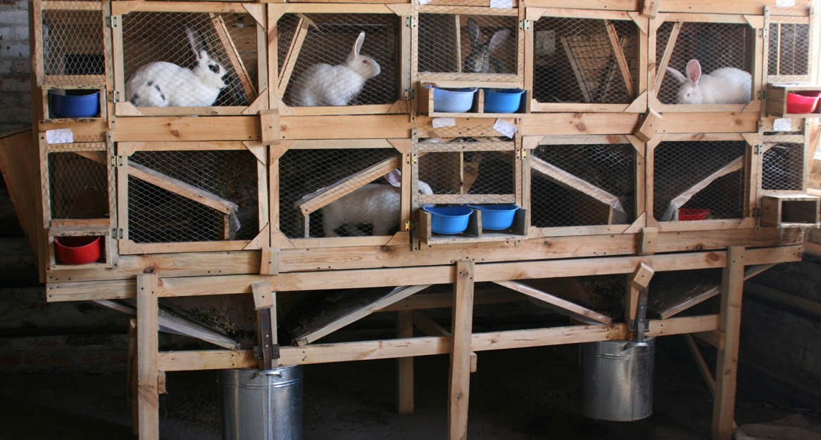 Кролик (53 фото): разведение в домашних условиях. правила ухода за маленькими кроликами дома для начинающих. как они выглядят?