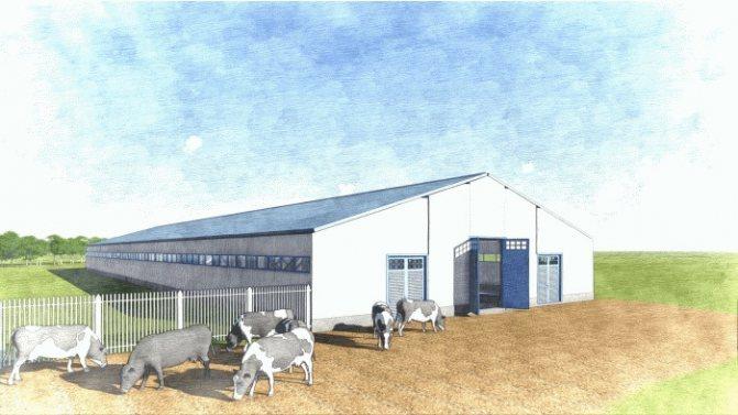 Мини-ферма крс на 10 голов - бизнес-план, алгоритм строительства