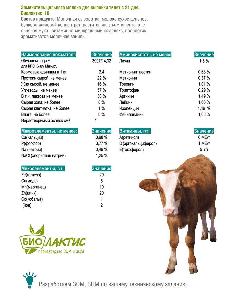 Как искусственно выпоить теленка?